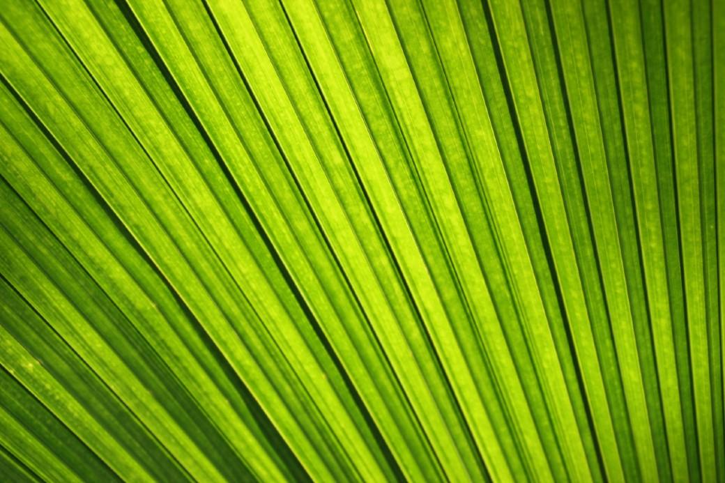 Tornar-se verde deveria ser estratégia chave pós-pandemia