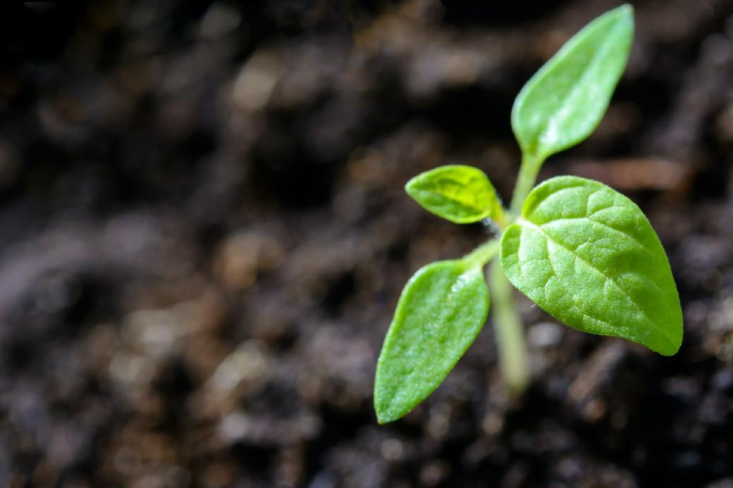 Como tornar a sustentabilidade central para os negócios