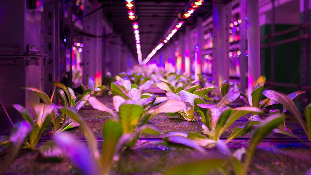 Agricultura urbana é central no desenvolvimento pessoal e das cidades