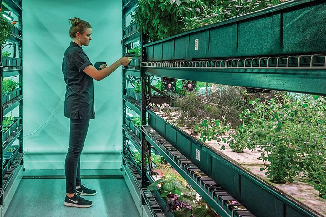 Futuro do trabalho: que habilidades serão necessárias para os empregos verdes?